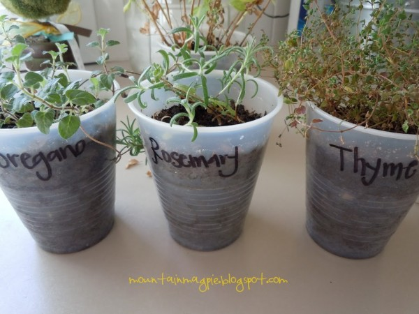 Growing Herbs on the Windowsill {Gypsy Magpie}