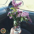 Summer Intentions of a Truck Wife {Gypsy Magpie}