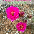 Magpie Adventures- Red Reef Trail {Gypsy Magpie}
