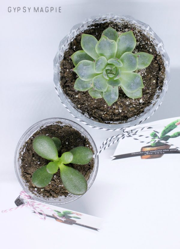 Aren't these teacher gifts adorable? Download the free printable and start planting!