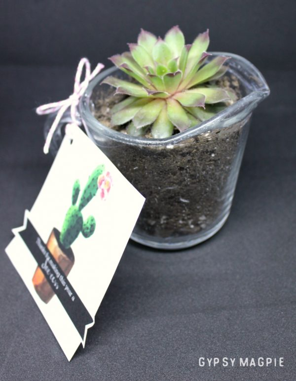 This succulent teacher gift is so cute and easy!