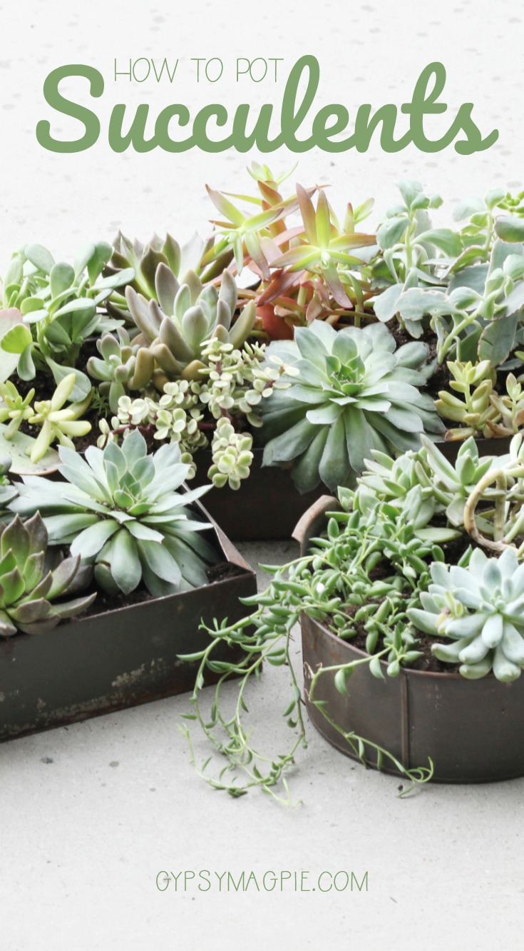 How to pot succulents | Gypsy Magpie
