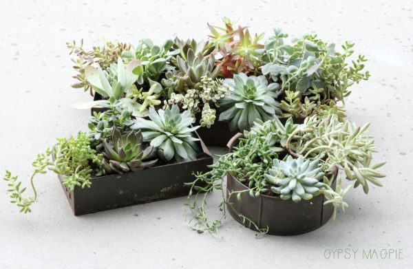 Succulents are such a fun way to perk up a patio! These rusty planters are so darling! | Gypsy Magpie