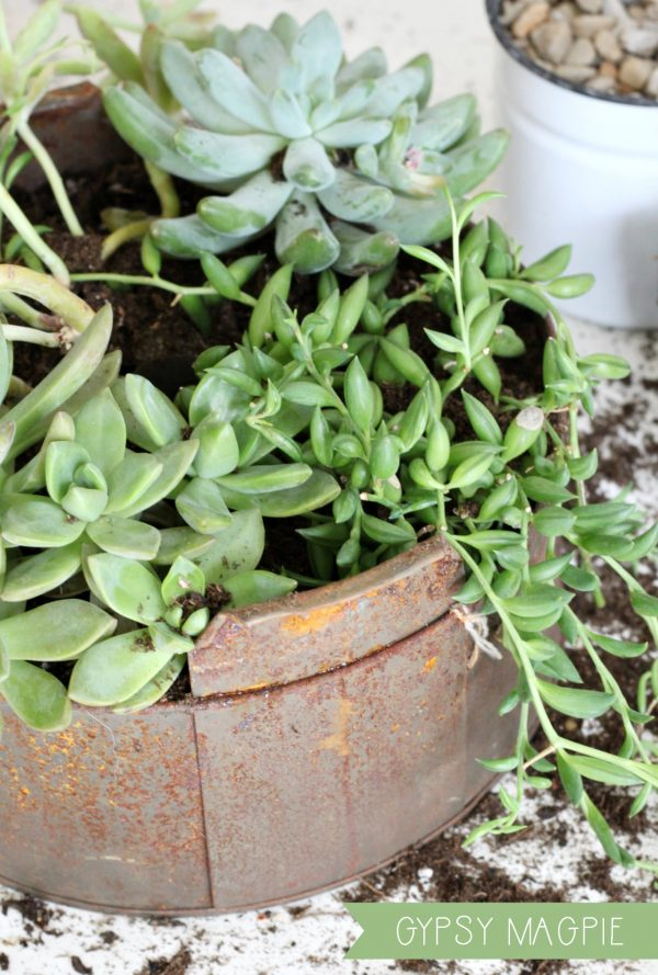 Succulent planters are so simple and yet breathtaking! Come learn how to make your own! | Gypsy Magpie