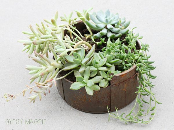 Succulents in a vintage baking tin? Yes please! | Gypsy Magpie